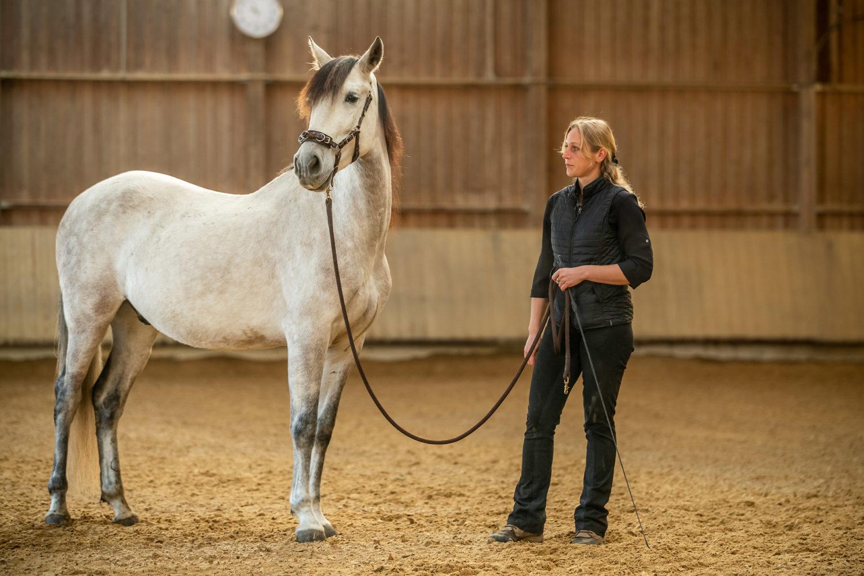 Pferd Bodenarbeit
